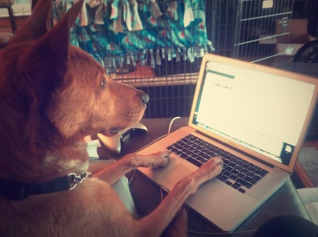 Rookie Blogging